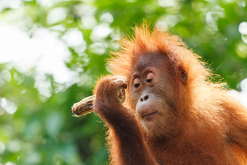 蓋瑞遜咖日記│Day 42 猴王